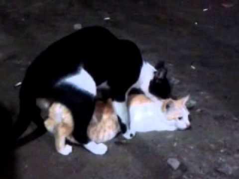 Kucing Kawin Lucu Bangeeets Youtube