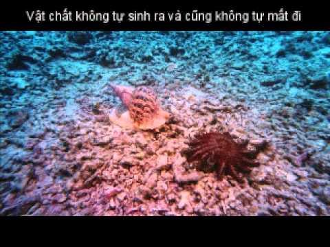 Hệ sinh thái rạn san hô