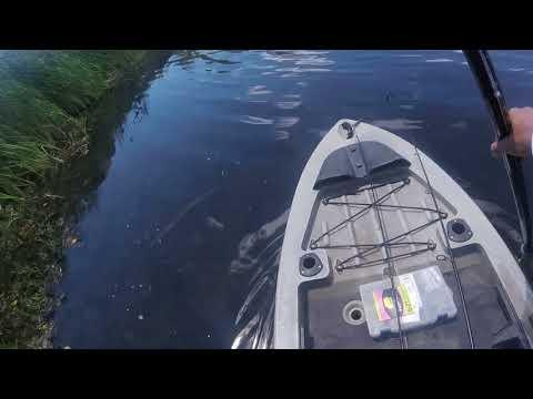 CRAZY SNAKEHEAD ACTION AT BURKE LAKE