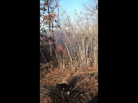 West Greenwich Field Fire