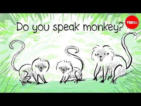 Video image: How to speak monkey: The language of cotton-top tamarins - Anne Savage