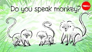How To Speak Monkey: The Language Of Cotton-top Tamarins - Anne Savage