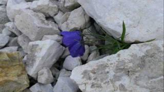John Denver The Flower that Shattered the Stone