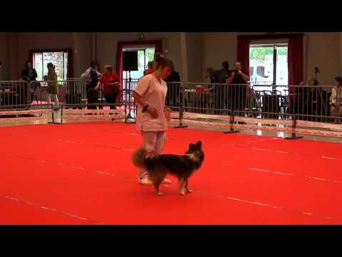 Dogdancing contest - ECCR - Beginners Freestyle with Taïga