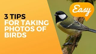 how to take bird photographs for beginners 3 tips for easy bird photography