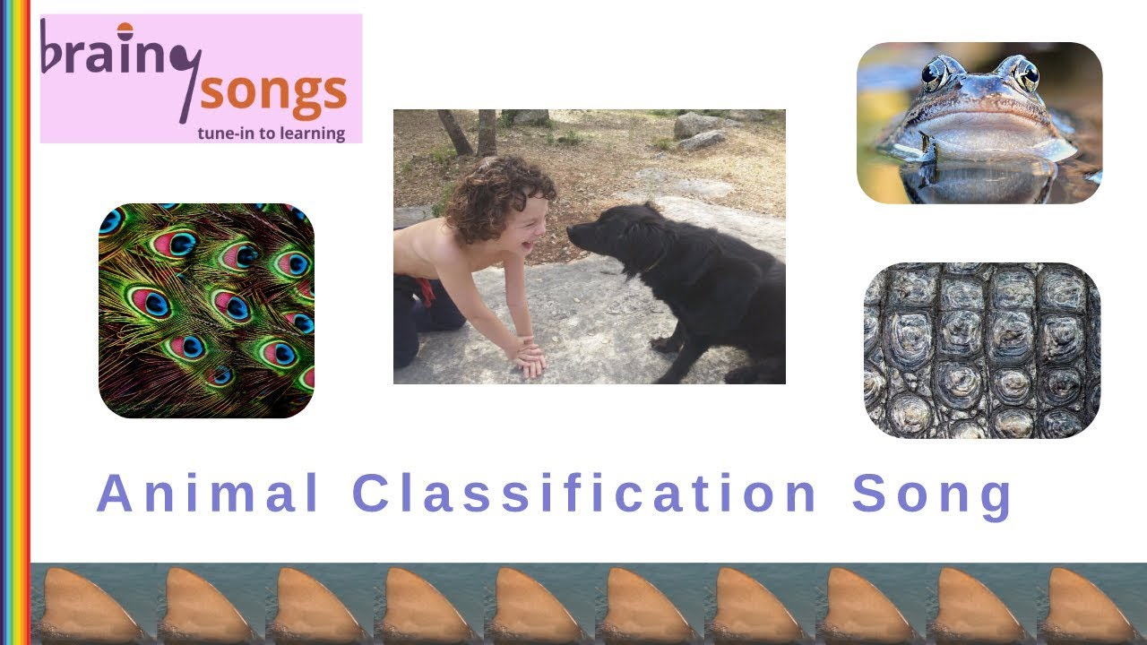 medium resolution of Animal Classification Song   Science Songs - YouTube