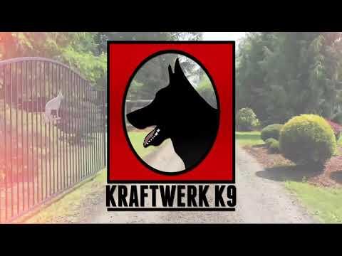 kraftwerk-k9-german-shepherd---lightning-fast-obedience-and-in-full-control-of-her-emotions!