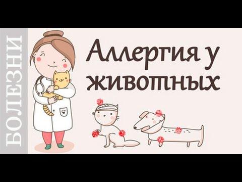 Стафилококк у собак: симптомы, лечение, профилактика - Kot-Pes