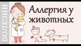Аллергия у животных, советы ветеринара.(, 2016-02-05T13:23:36.000Z)