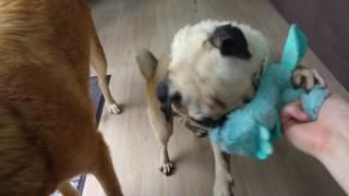 Hunde-Vlog 2