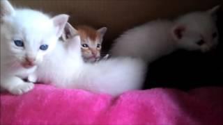 飼い猫ミルクが子猫を産みました。 ミルクのLINEスタンプ作りました。 □...