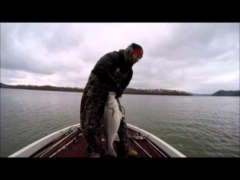 Watts bar lake stripers white bass fishing january for Watts bar fishing report