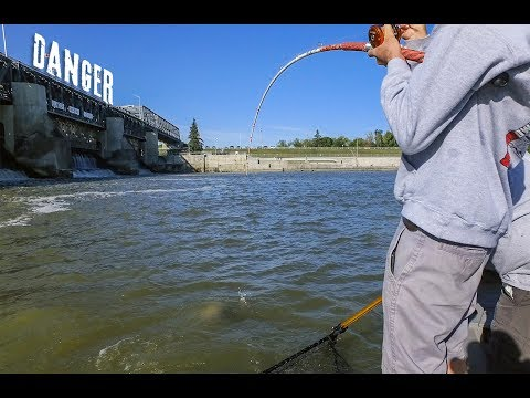 Fishing A HUGE DAM For MONSTER FISH - CATFISHING