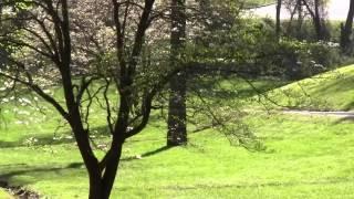 Wintersun Disc Golf - Asheville (Part 2)