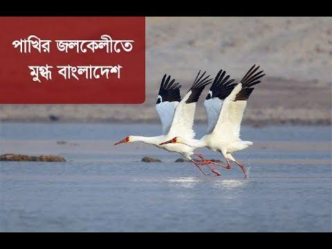 হাজারও অতিথি পাখির মনোমুগ্ধকর খুনসুটি   Migratory Bird   Somoy TV