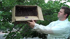 Bee Removal | Effective Bee Removal Fort Worth