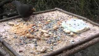 "Natuur in eigen land - Documentaire ""Natuur in eigen tuin"""