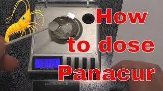 SHRIMP TANK Dewormer - Panacur help on dosing - KILL Hydra & Planaria