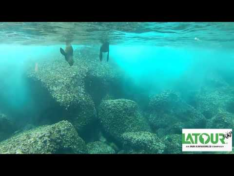 Tours To Galapagos Islands - Latour, Best Tour Operator For South America Tours