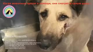 Собака стала бездомной и ее жестоко обидели Она плачет от боли На ее глазах слезы