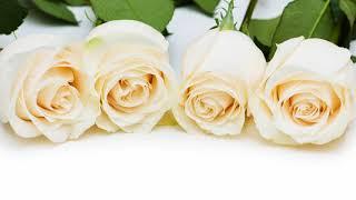 Что означают белые розы, подаренные мужчиной, молодым человеком?