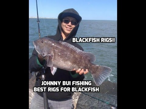 Blackfish tautog how to make the perfect rig some big for Tautog fishing rigs