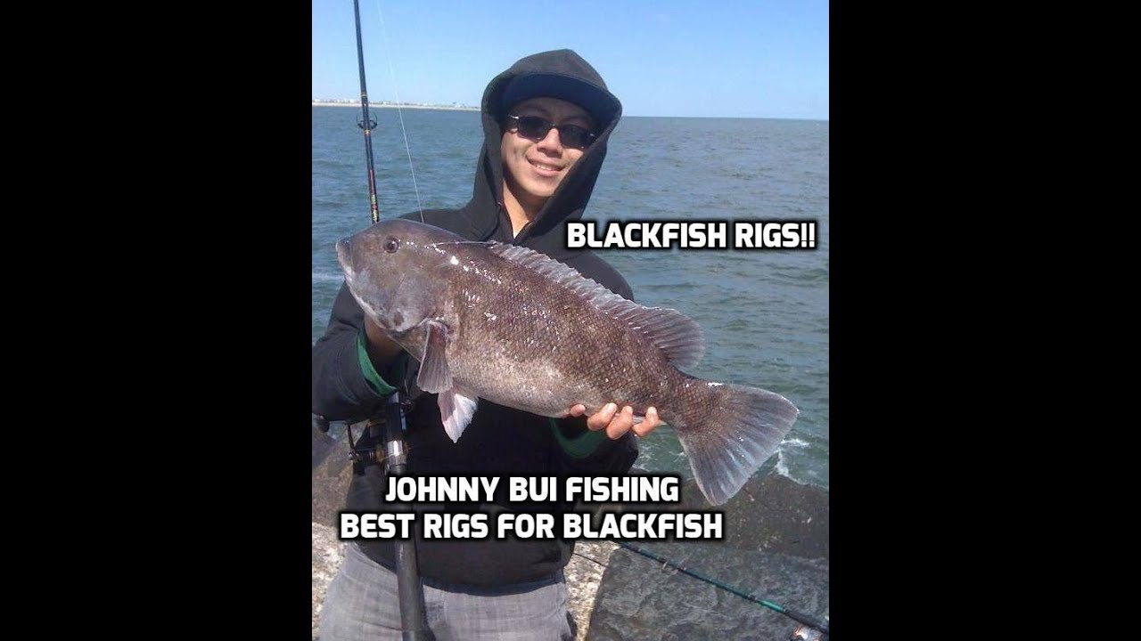 How to catch blackfish tautog nj best rigs to use for for Tautog fishing rigs