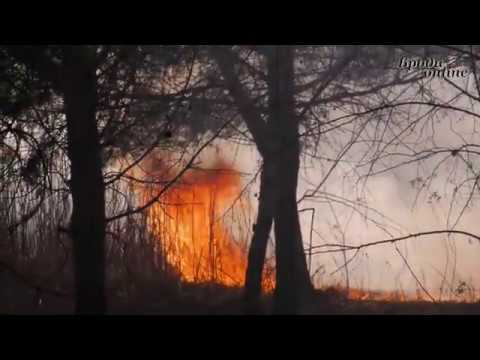 Телеканал Броди online: Чому на Бродівщині масово спалюють сухостій? (ТК