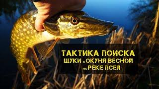 ТАКТИКА ПОИСКА ЩУКИ и ОКУНЯ ВЕСНОЙ на реке ПСЕЛ