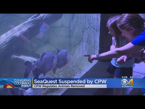 BEARDO - SeaQuest Exhibit In Littleton Is Shutdown By Colorado Parks and Wildlife