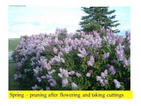 canadian gardening zones  gardening direct  gardening leave  gardening zones  gardening jobs  tips