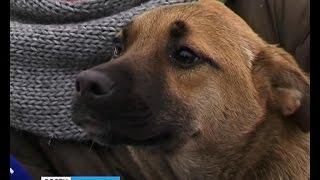 Волонтеры из организации «Право на жизнь» приступили к отлову и чипированию бездомных собак