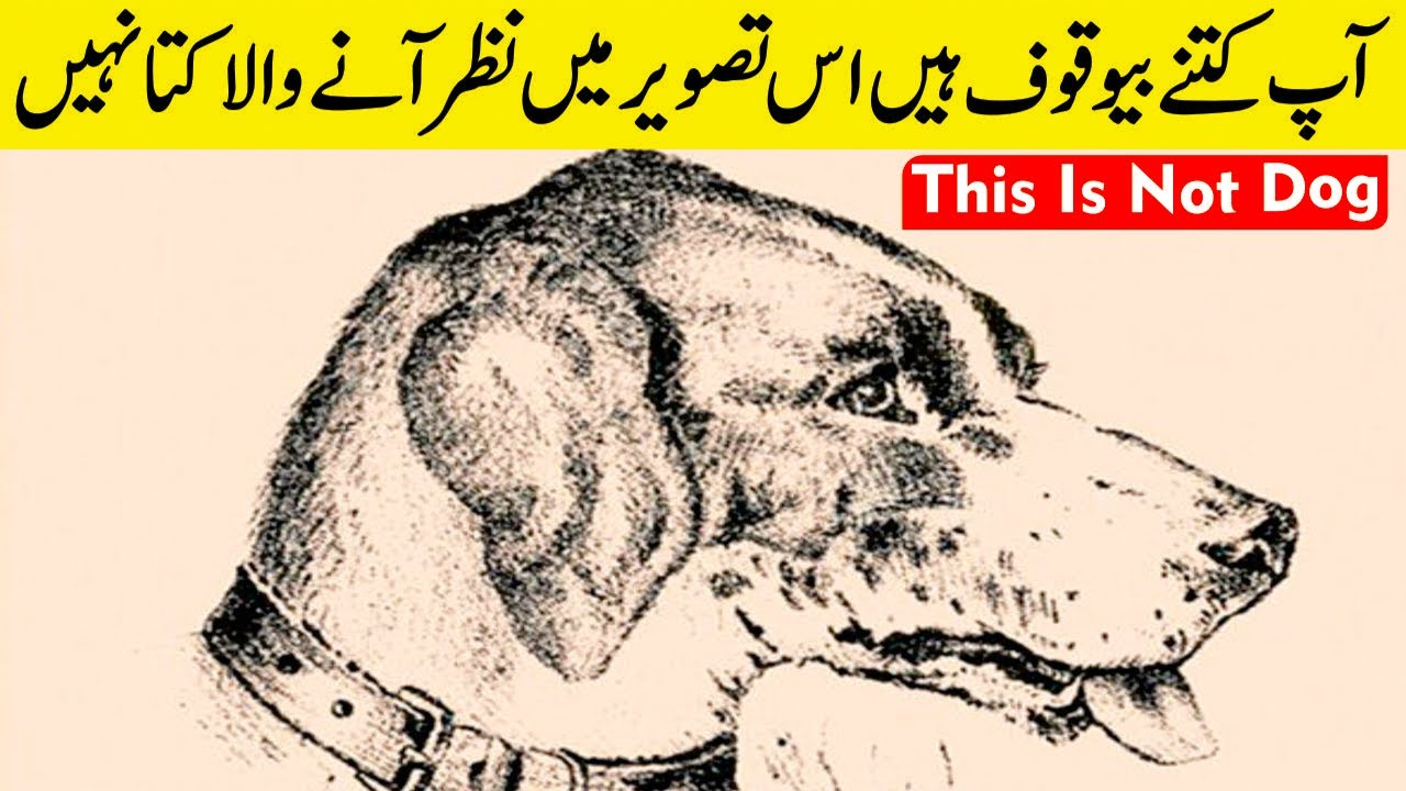 Optical Illusions That Will Put Your Brain to Work || This is Not Dog