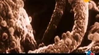 Тайны вируса СПИДа.  Мистификация или угроза?