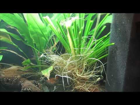 TETRA 105 aquarium