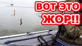 Клев рыбы пулемет отдыхает Бешеный клев окуня и щуки Окунь клюет нереально Окунь на спиннинг