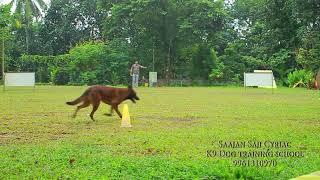 Fci competition retrieving practice. Saajan Saji Cyriac K9 dog training..9961310970