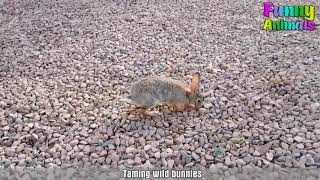 Friendly Wild Animals Showing Love to Humans   Funny Animals Videos 2017