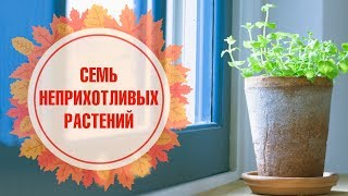 видео Экзотические растения для дома: выбираем правильно!