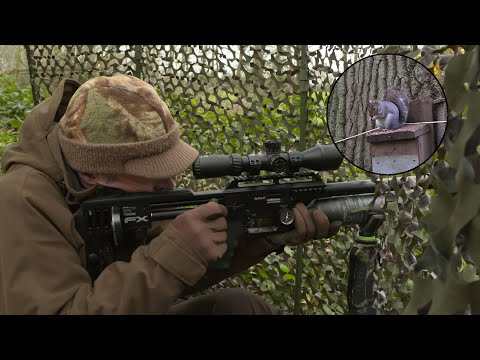 the-airgun-show-–-the-best-bait-for-squirrel-hunting-–-part-2,-plus-pao-reflex-sight-on-test…