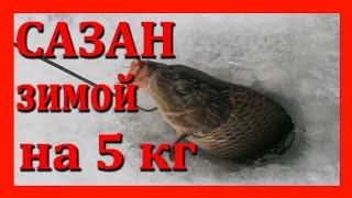 Все секреты про ерша - Рыбалка - Охотники.ру