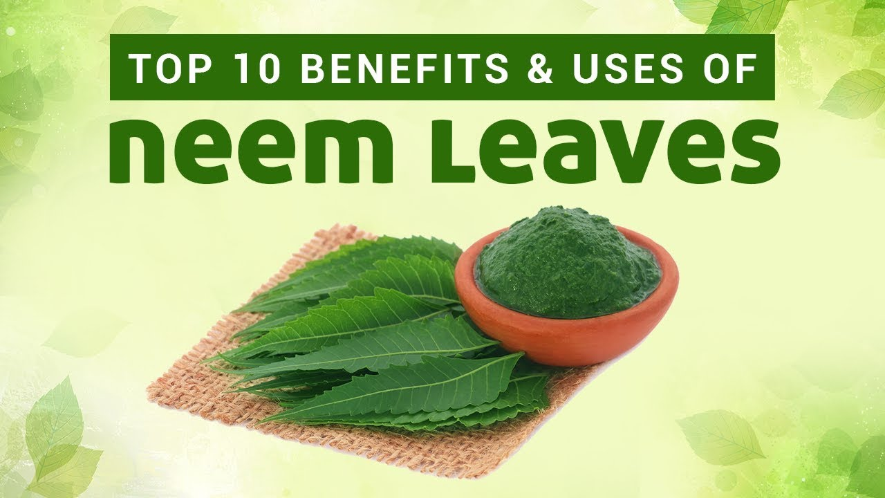 Top 10 Benefits & Uses Of Neem Leaves | Neem Benefits and uses for Skin,  Hair & Body