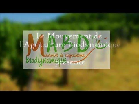 Régénération de la vigne en lien avec le cours aux agriculteurs