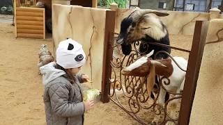 Ребенок и животные. Мини зоопарк. Кормим животных. Child and animals. Mini zoo.