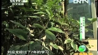 20131110 中华医药 清新中医故事 无形之药