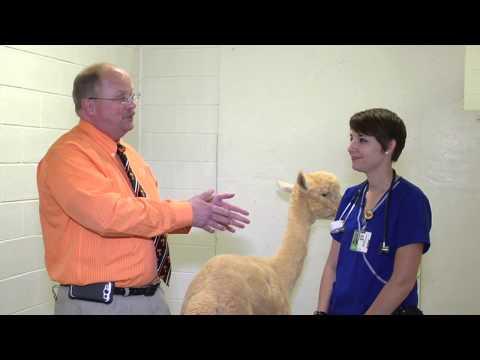 A Veterinary Student