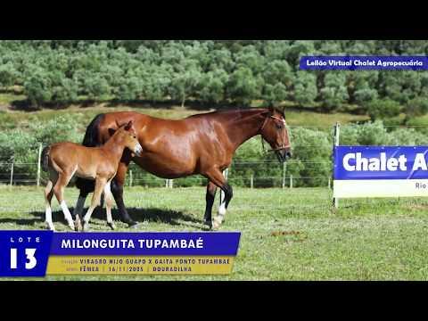 LOTE 13 - Milonguita Tupambaé