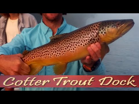 July 29, 2020 Arkansas White River Trout Fishing Report