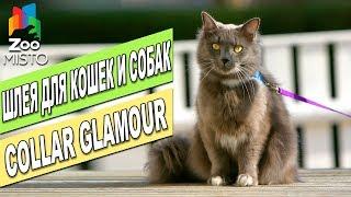 Collar Glamour шлея с поводком для кошек и мелких собак   Обзор Шлеи Коллар   Collar Glamour Review