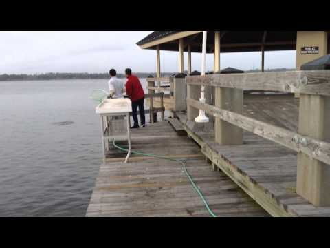 How To Catch A Redfish In Mississippi
